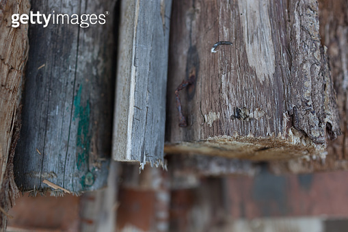 Abstract background with felled wood.Selective focus