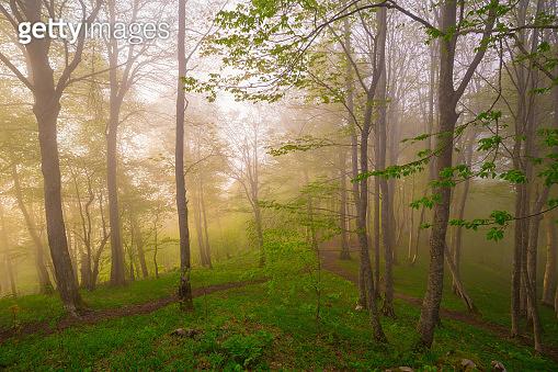 Mountain summer. Fairy misty forest, sunset