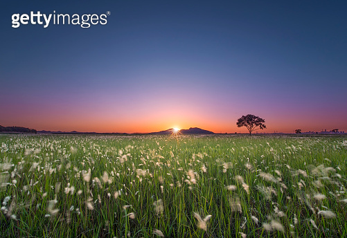Beautiful view of rice paddy field during sunset in Republic of Korea. Nature composition
