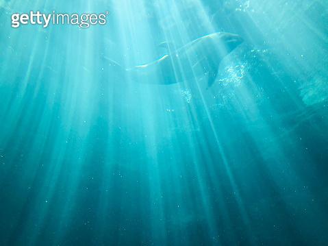 Dolphin underwater on blue ocean