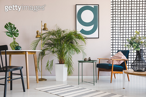 Chair at table with leaf in apartment interior with plants, wooden armchair and poster. Real photo