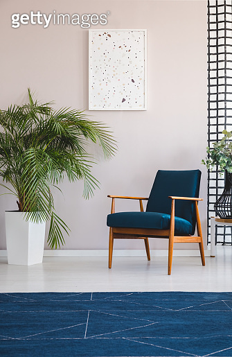 Navy blue carpet and plant next to armchair in living room interior with poster. Real photo