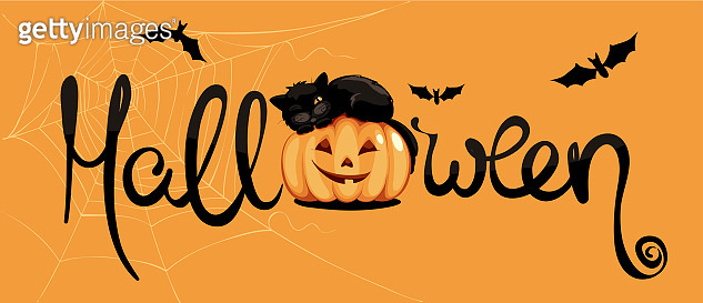 Black cat on pumpkin