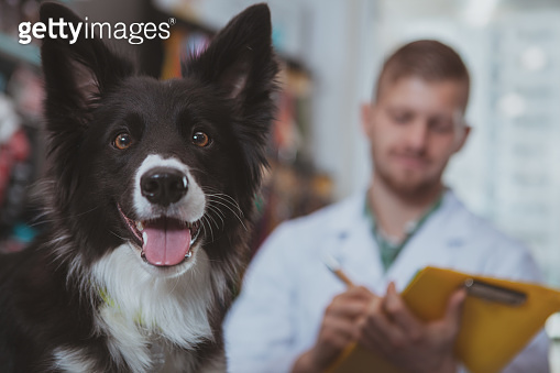 Handsome male veterinarian examining a doc