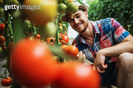 Young adult man working in greenhouse