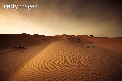 wahiba sands desert at the sultanate of oman