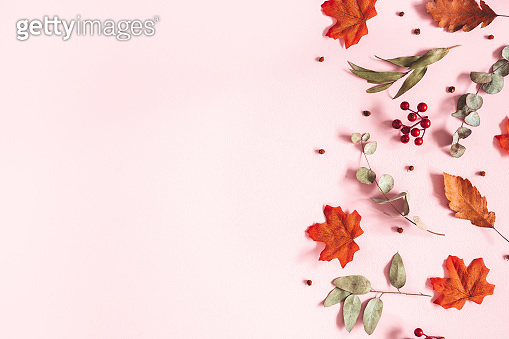 Autumn composition. Dried flowers, eucalyptus leaves, rowan berries on pink background. Autumn, fall, thanksgiving day concept. Flat lay, top view, copy space
