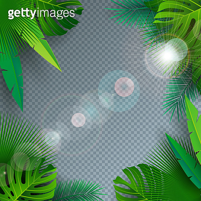 Vector Summer Illustration with Tropical Palm Leaves on Transparent Background. Exotic Plants and Sunlight for Holiday Banner, Flyer, Invitation, Brochure, Party Poster or Greeting Card.