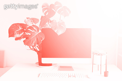Keyboard, mouse, computer display with black blank screen. Front view. Modern designer workspace on trendy coral color background. Minimalistic home office, monstera flower.