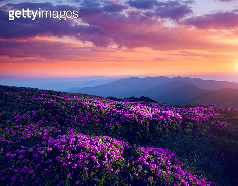 Scenic image of the wilderness area. Location Carpathian national park, Ukraine, Europe.