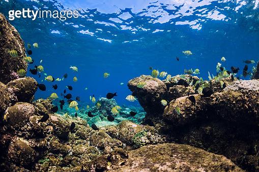 Underwater scene with school of fish over stones bottom. Tropical blue ocean