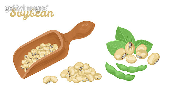 Soybeans in wooden scoop isolated on white background. Soya, green pods and heap of beans. Vector illustration of legumes in cartoon simple flat style.