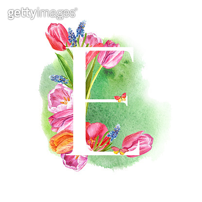 A letter of the alphabet with spring flowers, muscari tulips,