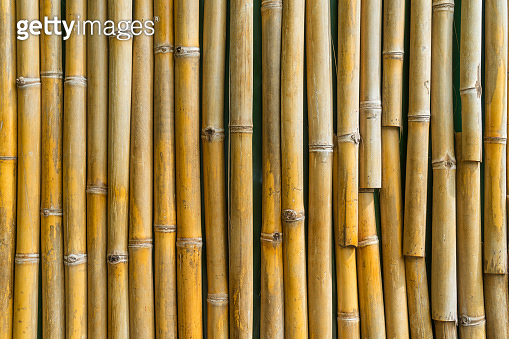 Texture yellow bamboo fence wall background