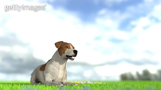 Jack russel terrier on the floor of grass with wild flowers 3d illustration