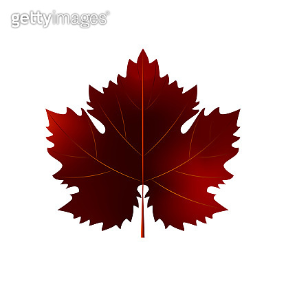 Realistic autumn grape leaf isolated on white background. Vector illustration