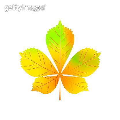 Realistic autumn chestnut leaf isolated on white background. Vector illustration