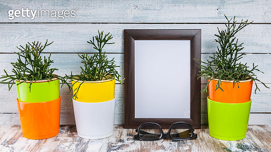 Mockup of empty photo frames and plants in multi-colored pots on a light wooden background.
