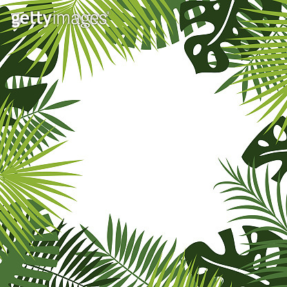 white place for text surrounded by frame or border of leaves of fern, palm, monstera.