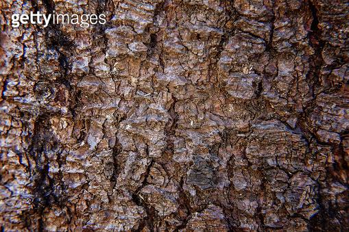 Pine bark close up texture