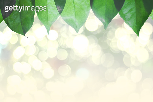 Pattern of green leaves background and bokeh light with copy space,Nature background,Abstract background,Bokeh background