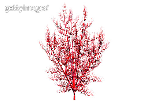 Gigartina Pistillata is an edible red seaweed, It is used in various applications in the food industry as thickener, gelling agent, suspending agent and stabilizer. 3D Rendering