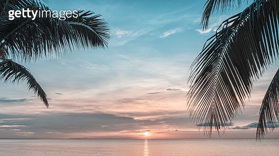 Sunset and palms - nature background