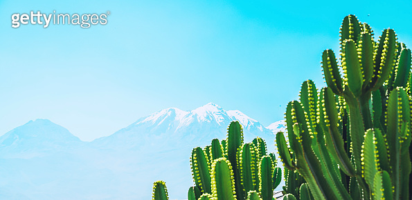Cactus with Andean backdrop