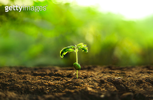 Young plant,Planting trees Strong seedlings on soil and natural green background
