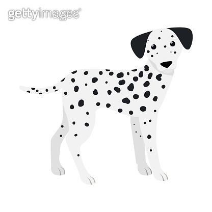 Dalmatian. Cute purebred dog.