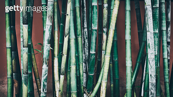 Bamboo stalks against wall, oriental background.