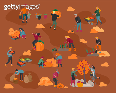 People gathering crops or seasonal harvest, ollecting ripe vegetables, picking fruits and berries, remove leaves. Men, women work on a farm