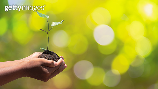 Environment earth day In the hands of trees growing seedlings. Bokeh green background male hand holding tree on nature field grass forest conservation concept.