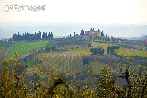 typical Tuscanian landscape - a view of a villa on a hill, cypress alley and a valley with vineyards at province of Siena. Tuscany, Italy'n