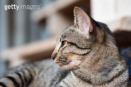 Tabby cat looking something