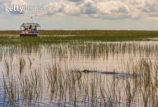 Florida Everglades airboat rides to see aligators