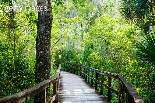Florida wetland, wooden path trail at Everglades National Park in USA.