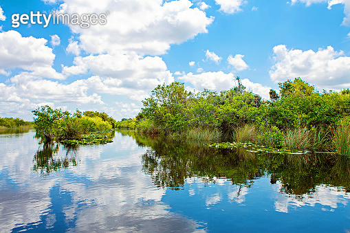 Florida wetland, Airboat ride at Everglades National Park in USA. Popular place for tourists, wild nature and animals