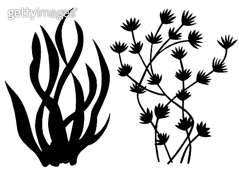 Sea weed black silhouettes, grass, leaves
