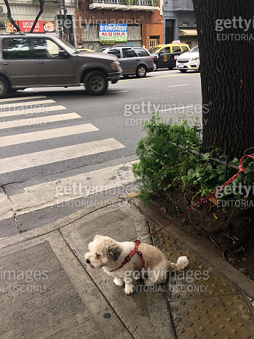 Cute dog with leash attached next to tree