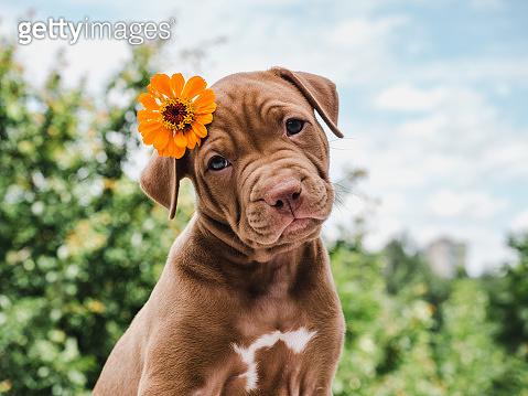 Cute, charming puppy, sitting on a soft rug