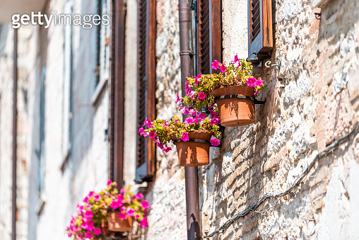 Assisi, Italy town or village city in Umbria closeup of window and pink flower pots decorations on sunny summer day with nobody architecture