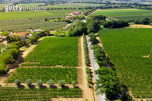 Drone aerial view of olive trees and vineyard, Chianti region, Tuscany, Italy