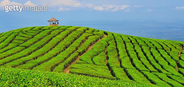 Traditional gazebo on hill top highland in mountain tea plantation.