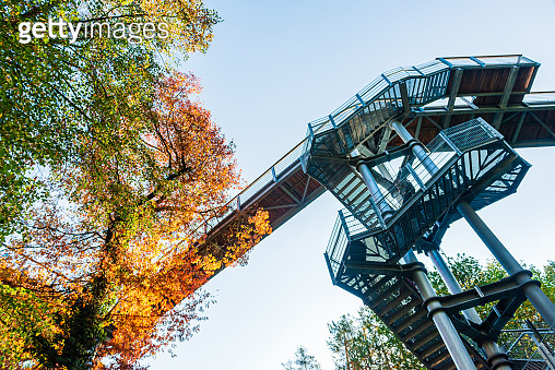 Treetop path through the mixed forest at the Beelitz near Berlin in Germany, view from below to the supports and wooden planks. Autumn trees.