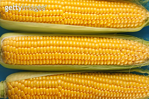 Fresh corn cobs, top view