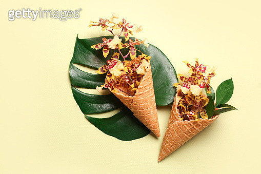 Wafer cones with beautiful orchid flowers and tropical leaf on color background