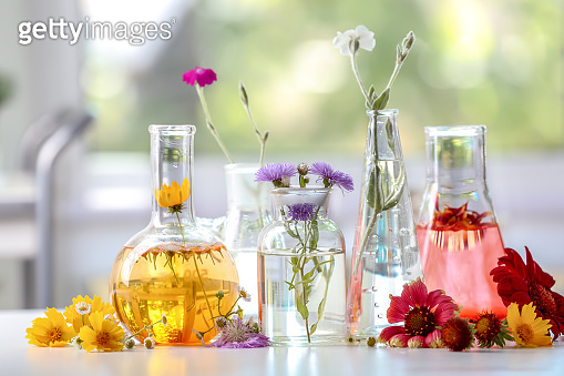Flasks with plants on table in laboratory