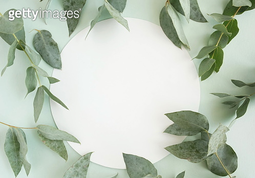 green eucalyptus leaves , branches, herbs, plants frame border and card for text on neo mint color background top view. copy space. flat lay. poster