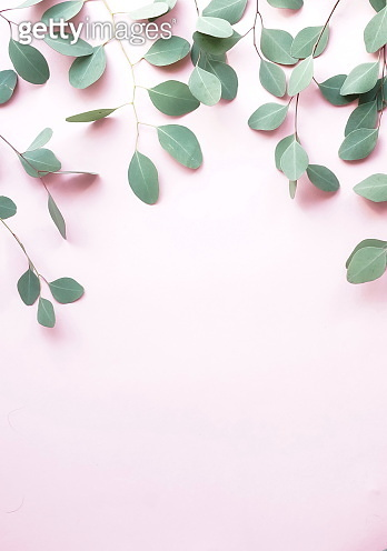 green eucalyptus branches herbs, leaves,  plants frame border on pale pink  background top view. copy space. flat lay